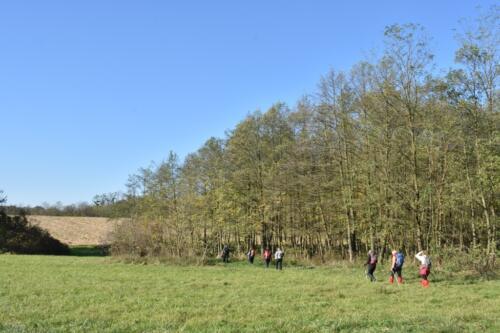 Uz šume i polja