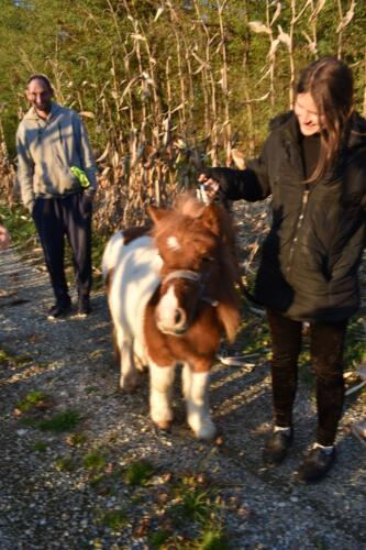 Pony u šetnji